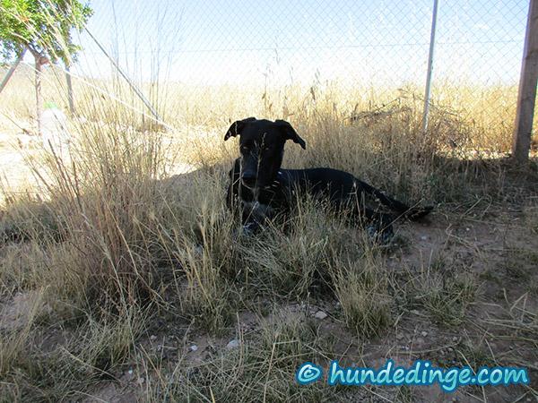 hund-springt-ueber-zaun