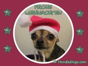 frohe-weihnachten-hund