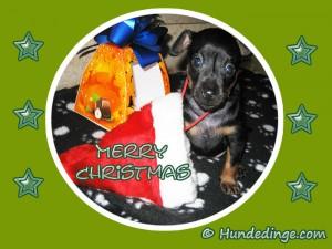 hund-merry-christmas