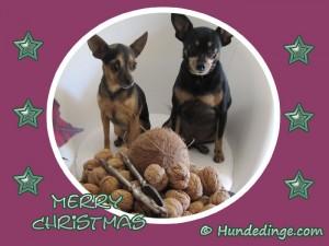 merry-christmas-hunde