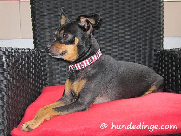 Nähen für Hunde – Hundedinge